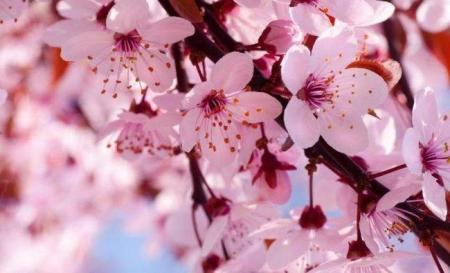 清明小长假 赏花正相宜