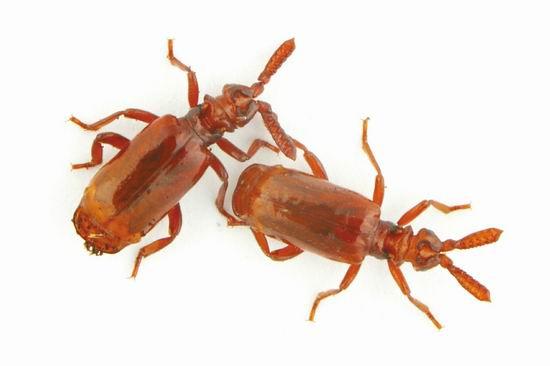 """""""哪些虫吃苹果,哪些虫吃枯树皮,哪些虫吃蜗牛,两个大男人早就心中有数"""