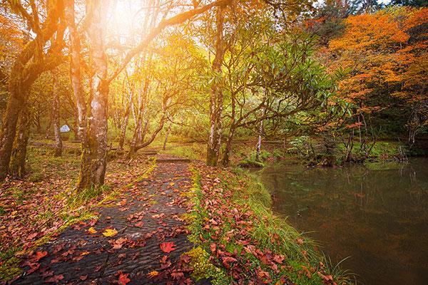 二郎山国家森林公园喇叭河景区