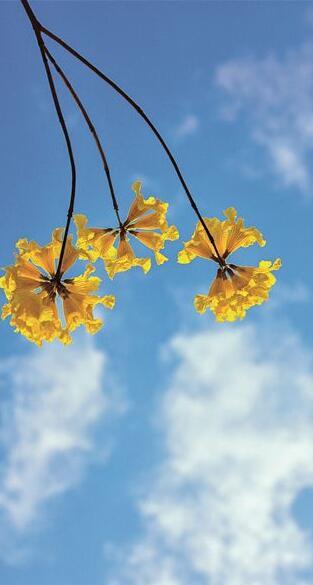 莫负春光 赏花去
