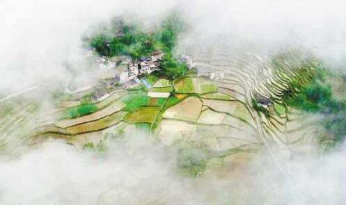 晨雾下的梯田