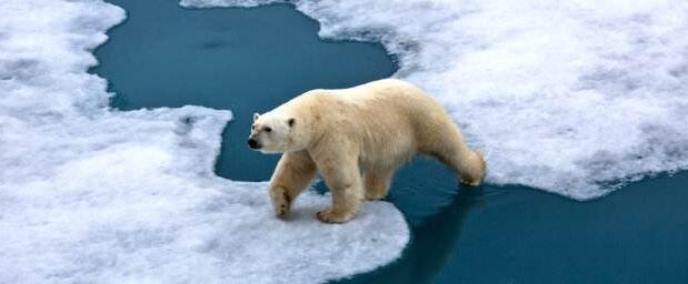 新西兰气候变化部长:中国应为气候变化树榜样