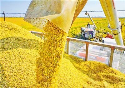金秋至 收稻子
