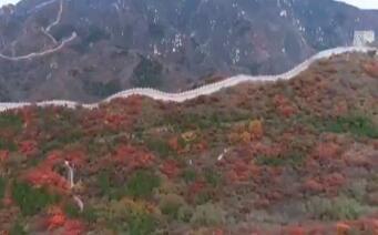 八达岭看红叶了