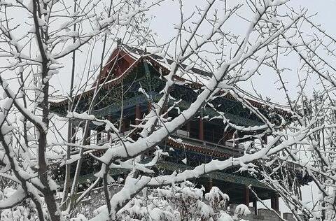 青海:瑞雪落高原