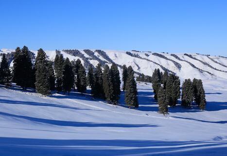 白雪皑皑显美景
