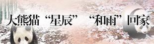 """大熊猫""""星辰""""""""和雨""""回家"""