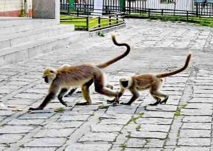 人与猴子和谐相处