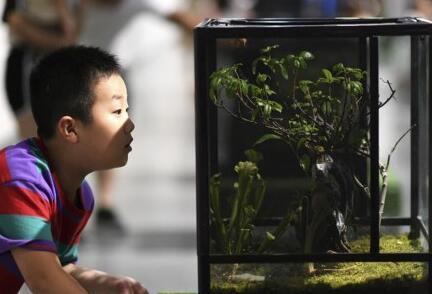 暑期探索昆虫世界