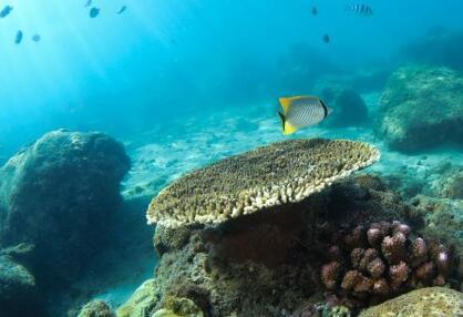 五彩斑斓的水下世界