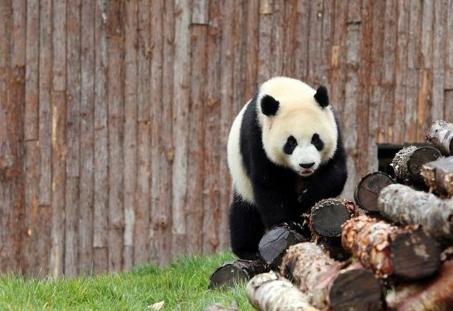 甲勿海大熊猫保护研究园开园