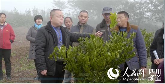 荣县新桥镇:回引200名农民工返