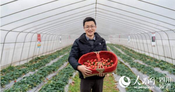 刘海川在草莓地里(成都轨道集团 供图)