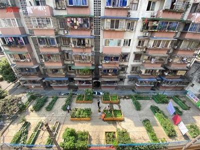 """这个老小区有""""板眼儿"""" 车棚顶上办起了空中菜园"""