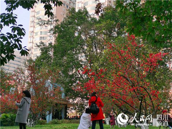 游客在海棠花下流连忘返。人民网 刘海天摄