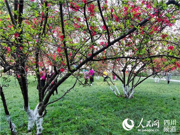 海棠花开引人来。人民网 刘海天摄