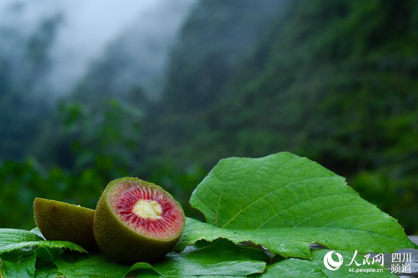 红心猕猴桃。张磊摄