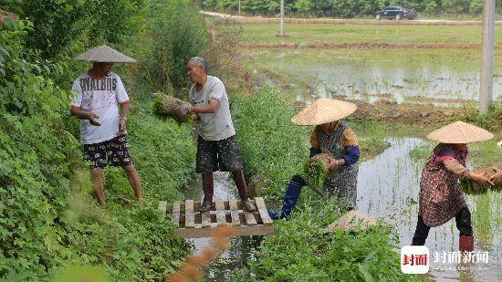 赢咖3娱乐注册:不浪费任何一立方米水!四川春灌用水这样做